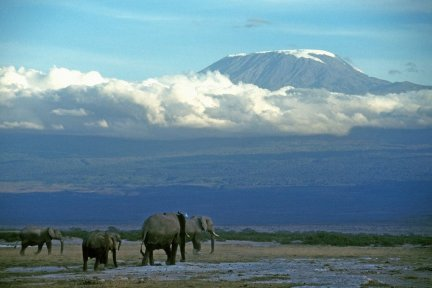 Trek to the roof of Africa for CHSW. Mount Kilimanjaro is the highest freestanding mountain in the world