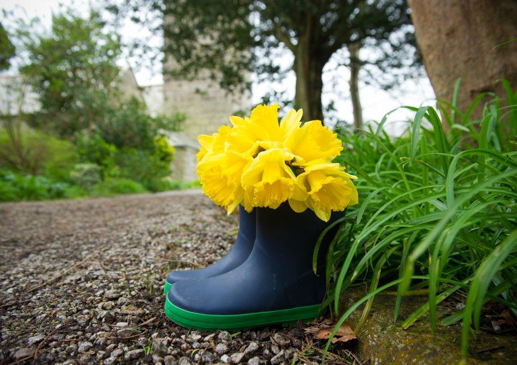 St Erth spring daffodil festival