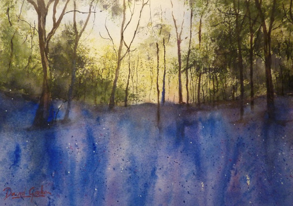 bluebell-wood-by-david-graham